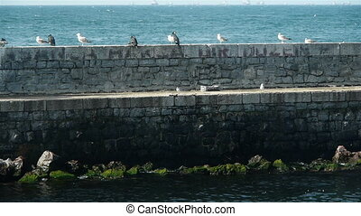 A pier with seagulls and ducks in Istanbul, Turkey