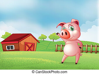 A pig at the farm pointing the barn house