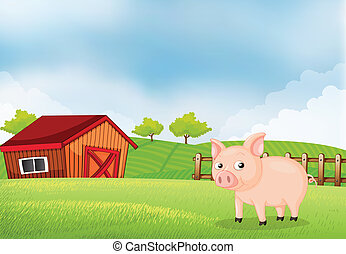A pig in the farm with barn