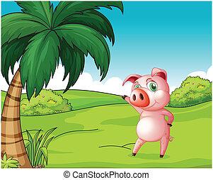 A pig near the coconut tree