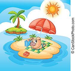 A pig sunbathing