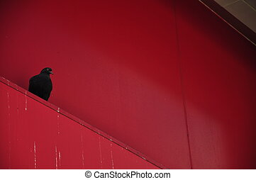a pigeon on the red wall