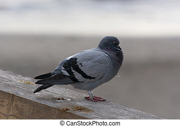 A pigeon on the wall
