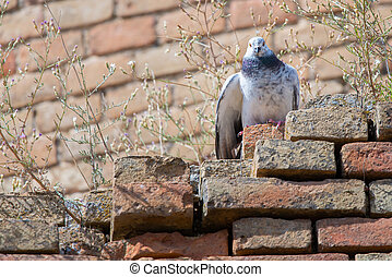 A pigeon perched on old brick wall