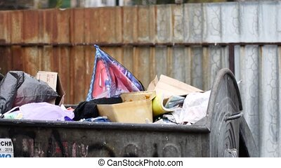 A pigeon sits on a garbage container. Bird looking for food in a landfill