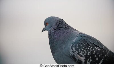 A pigeon sits on a perch and flies away. Slow motion