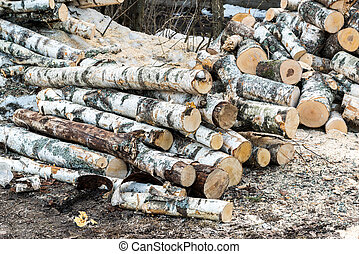 pile of birch logs lying on the ground