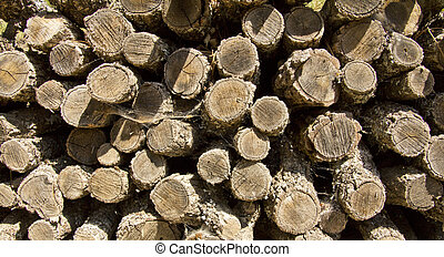 pile of cut logs for firewood