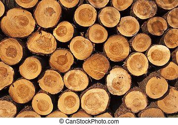 A pile of cut tree trunks giving a nice view of the concentric year rings