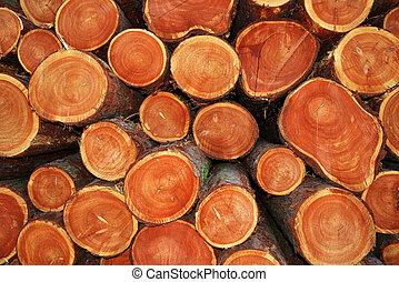 cut tree trunks  - A pile of cut tree trunks