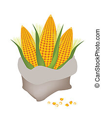 Three Fresh Ripe Sweet Corns in A Canvas Bag Isolated on A White Background