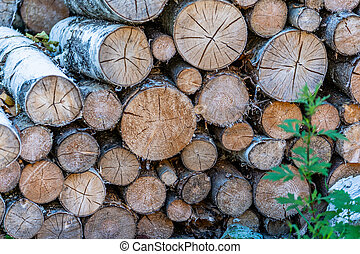 A Pile of Logs in the Backyard on the Sunny Summer Evening
