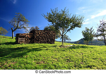a pile of logs on a green meadow in the autumn sun