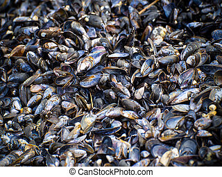 mussels - A pile of mussels