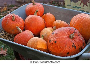 A pile of orange pumpkins in hand truck.