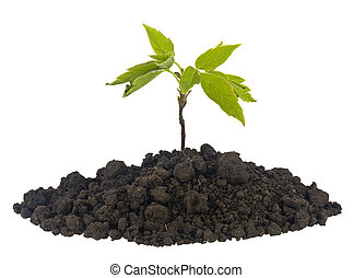 A pile of soil, soil with a tree plant isolated on a white background close-up.