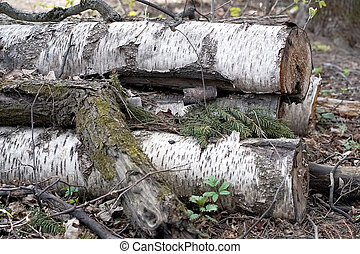 A pile of wooden logs on the ground. Wooden obsolete log, firewood