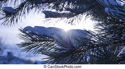 A pine branch covered with fluffy snow.