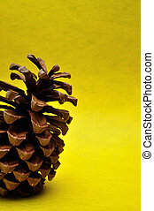 A pine cone on a yellow background