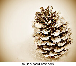 pine cone on the snow - a pine cone on the snow with a ...