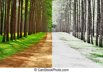 A pine forest taken in the morning at thailand - Season Change Concept