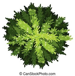 A pine tree - Illustration of a pine tree on a white ...