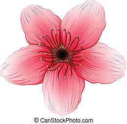 A pink five-petal flower