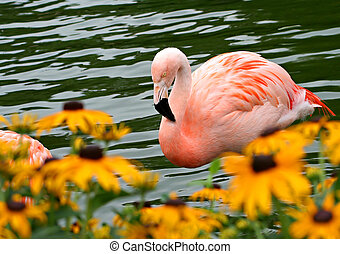 pink flamingo - A pink flamingo swimming near some flowers ...