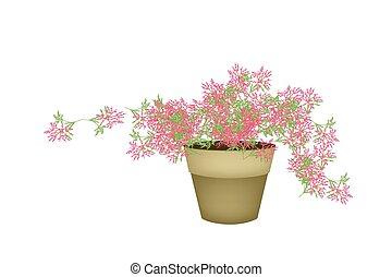A Pink Flowering Plants in Flower Pot - Illustration of...