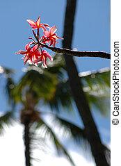 A pink frangipani (plumeria) flower set against palm trees and a blue sky