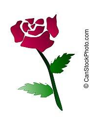 a pink rose - pink dark rose