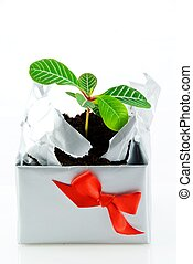a plant in a case