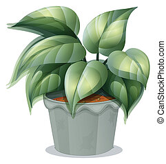 A plant in a pot