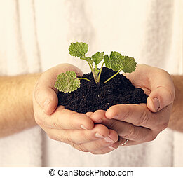 plant in hands against white