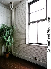 A plant in the corner of