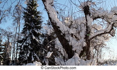 A plant is covered with thick snow