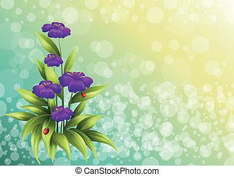 A plant with violet flowers