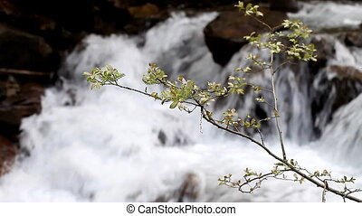 plants on the background of moving water