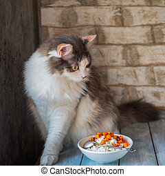 A playful fluffy cat climbed onto a table on which stands a plate with cottage cheese
