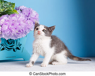 A playful kitten on a white table.