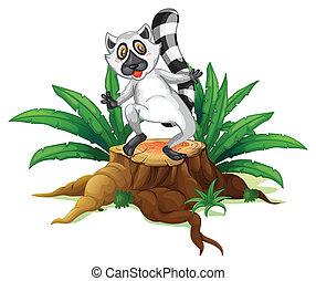 A playful lemur above the wood
