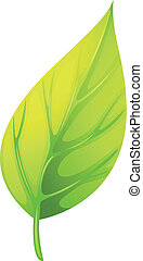 A pointed leaf - Illustration of a pointed leaf on a white...