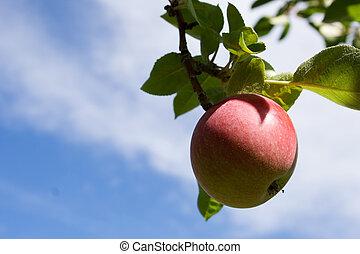 a, pomme