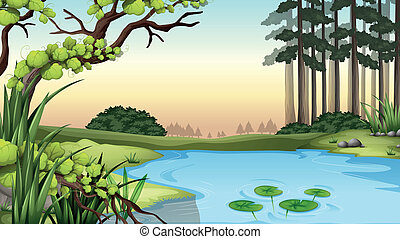 A pond at the jungle