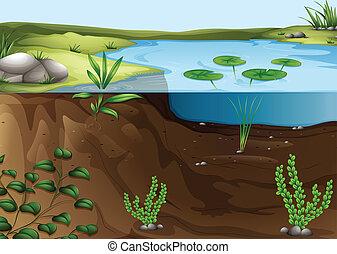 A pond ecosystem - Illustration of a pond ecosystem