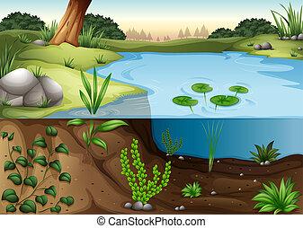 Illustration of a pond ecosytem