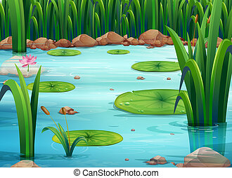 Illustration of a pond with green plants