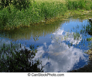 A Pond with Reflections of Clouds and Trees