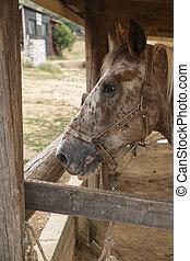 A Portrait of a Beautiful Horse in a Farm