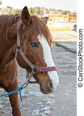 A portrait of a horse